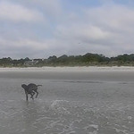 Slow Motion video of Maximus at 300 fps running on the beach for the first time in Hilton Head, SC.