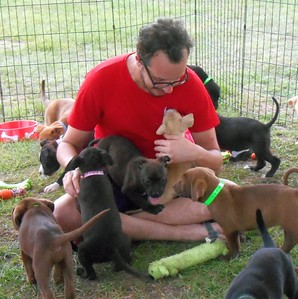 The Pied Piper of Pups...
