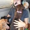 Puppy overload...