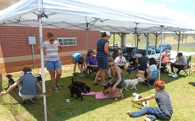 We are still waiting for another 19 pups to arrive from Anniston by plane. Wish we had another canopy!