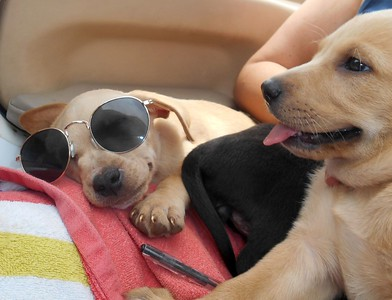 Cool pup....