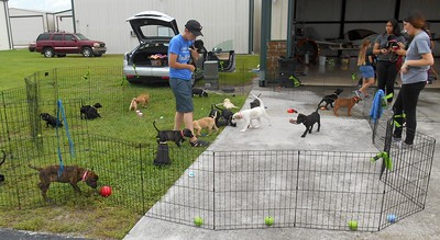 Close to when Nikki came to get them. Many of the Ground Crew left already.  A few pups were out of the pen playing with others.