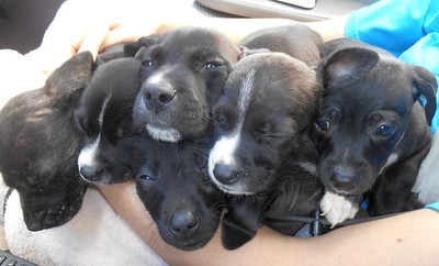 Yes, that is 7 pups on Tricia's lap!