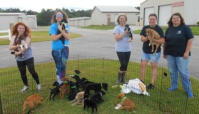 All the pups at Andalucia, AL.