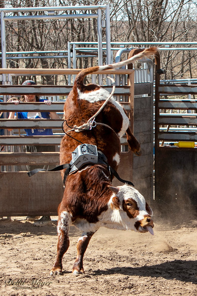 Lets Buck Some Bulls 2020