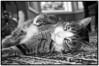 2012-01-21_McLovin_Sleeping~2