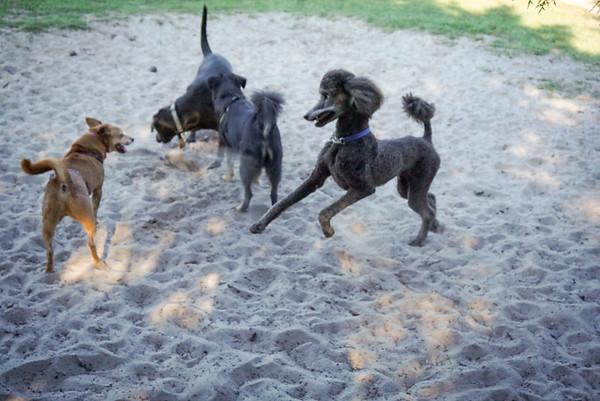 Meadows Dog Park, DrLight & Friends, NPR FL 3 18 2015