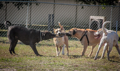 Meadows Dog Park Dogs, Ashley & Jack, River Walk, Farmers Market, New Port Richey 11 14  2014