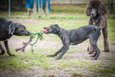 Meadows Dog Park Play, NPR FL 1 05 2015