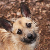 Trisha, 3-year-old Terrier X