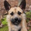Trisha, 3-year-old Terrier X