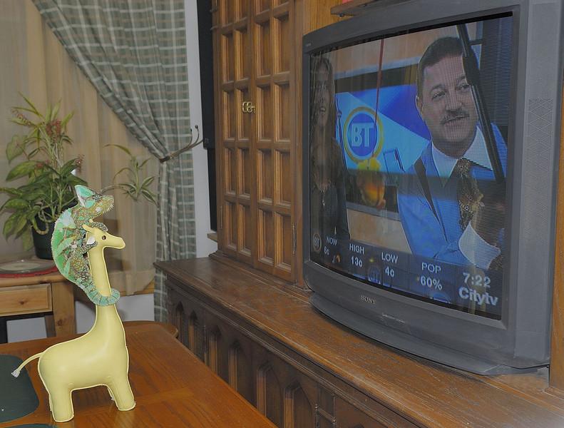 Tuesday November 13, 2007 - Buddy watching BT.
