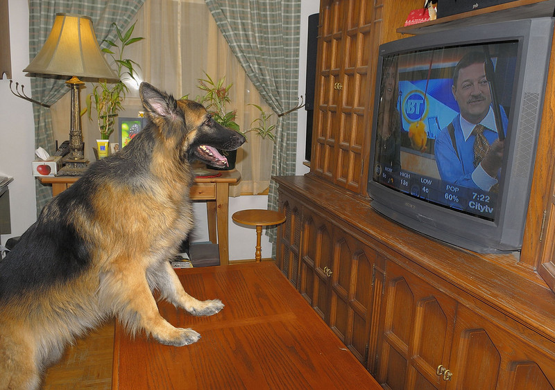 """Tuesday November 13, 2007 - Tera watching BT.<br /> When this was shown, Kevin remarked: """"Oh, that scares me..."""""""