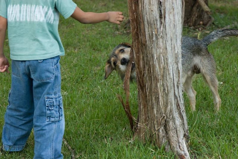 Bark boy!  Bark!  Wait......NOT THAT KIND OF BARK!!!!