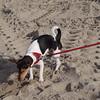 Jefke op het strand van Blankenberge.