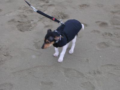 Een strandwandeling met Jefke in zijn jasje.