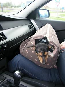 Met Jefke in de auto op weg naar Sluis.