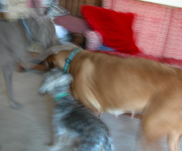 "MiMi, Chloe & Taylor...  ""Playtime!!!"""