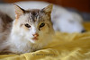 Mika (2002 - 2013) : Mika is a very ill 10-year-old female cat that we've taken in. We have no idea how long she'll be around. But it's better to die in a home than in a hospital.