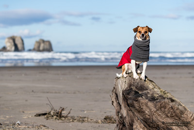 Small dog on a beach.