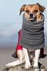 Small dog on a beach.