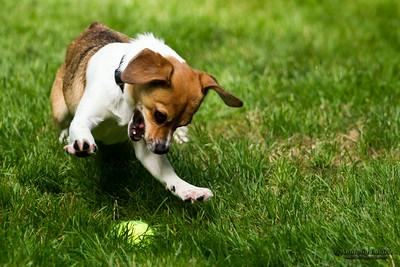 Small dog playing