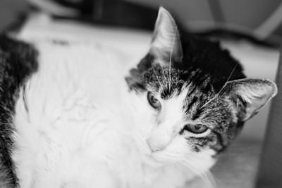 Mimi the Cat 2013