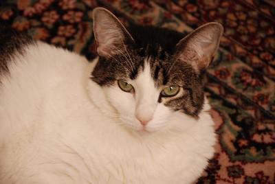 Mimi the Cat 2009