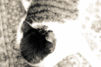 Mimi the Cat 2011