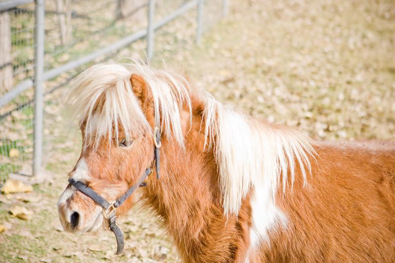 horses_R3P6268