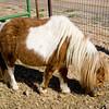 horses_R3P6274