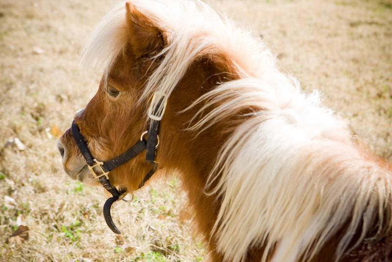 horses_R3P6269