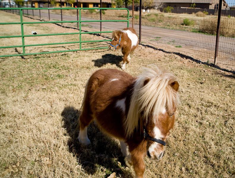 horses_R3P6276