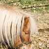horses_R3P6271