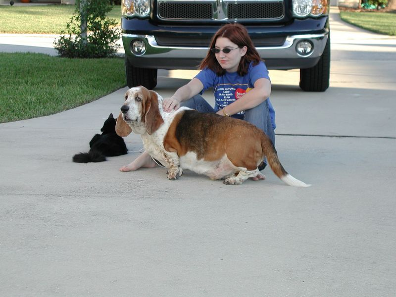 Kim, Peppermint and Minuteman chillin on the driveway in 2004.