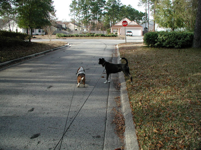 Minuteman and Rocky on a stroll in Highland Lakes.