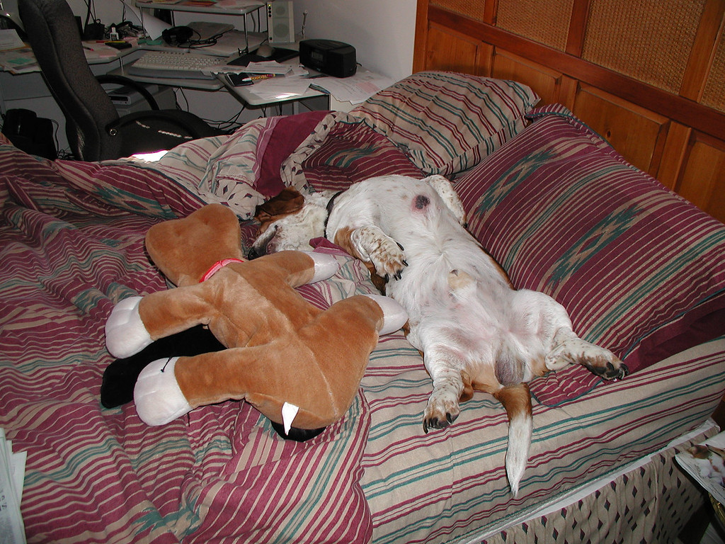 Ok, the stuff basset was put there, but it was not unusual to find him sleeping just like this.