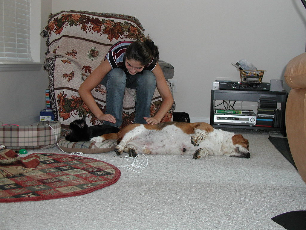 Minuteman and Peppermint relaxing in 2004 as Amy makes sure they are comfortable.