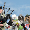 Poodle Day Parade 8x10 crop