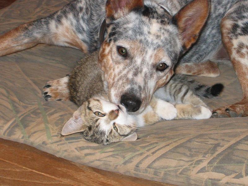 Rascal and Teddy