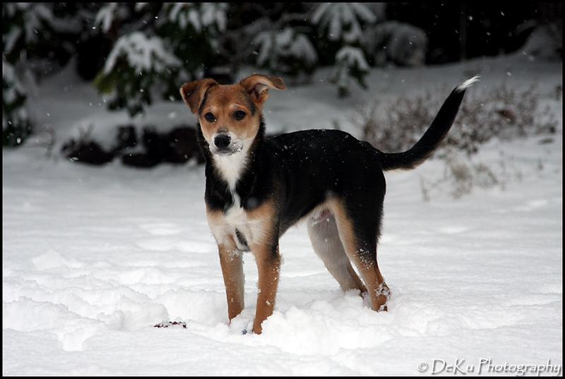 Moki-Snow(web)_0029