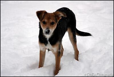 Moki-Snow(web)_0020
