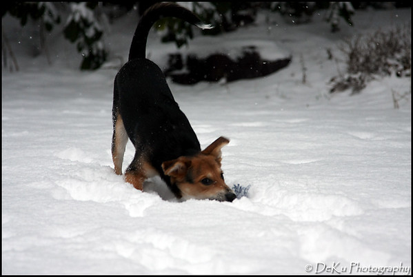 Moki-Snow(web)_0022
