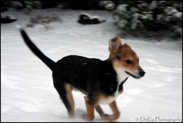 Moki-Snow(web)_0014