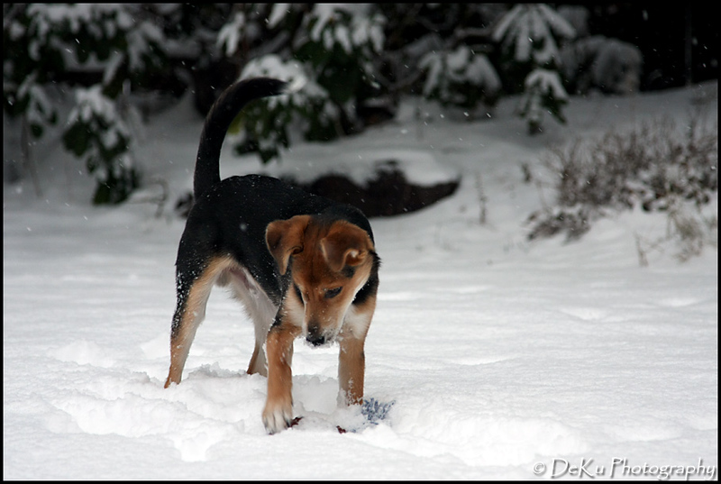 Moki-Snow(web)_0024