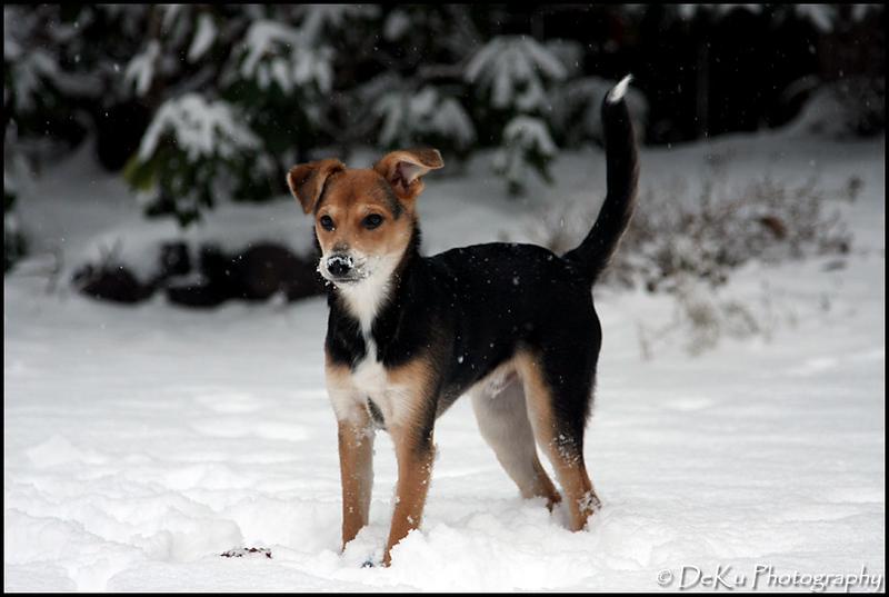 Moki-Snow(web)_0027