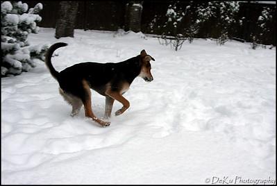 Moki-Snow(web)_0016