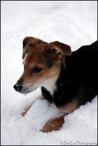 Moki-Snow(web)_0002