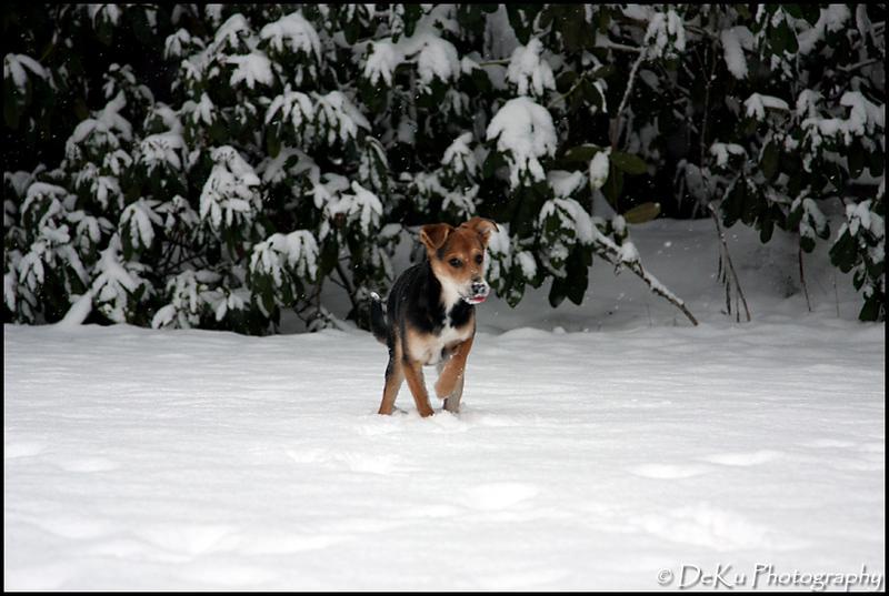 Moki-Snow(web)_0008