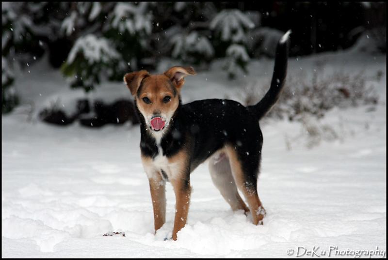 Moki-Snow(web)_0028